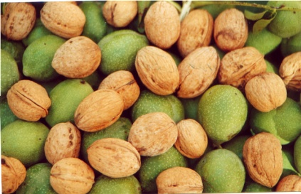 cevizkamn, vitaminlerin hangi besinlerde olduğu ve resimleri