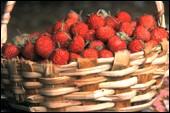 cilek1, vitaminlerin hangi besinlerde olduğu ve resimleri